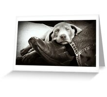 "OUR SILVER LAB ""GRACIE"" Greeting Card"