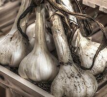 Garlic bunch by nadiamorris