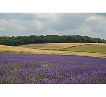 A field of lavender in the Sussex countryside Photographic Print