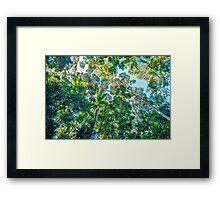 Valley of the Giants, Fraser Island Framed Print