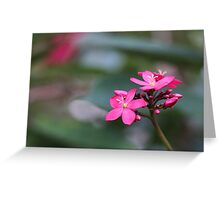 Bright pink peregrinas flower Greeting Card