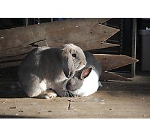 Dutch and Holland Lop Rabbit~Bunny~True Friends Photographic Print