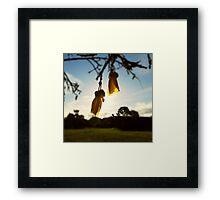 Kowhai shine Framed Print