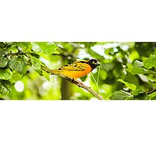 Bird in Chester Zoo  Photographic Print