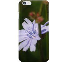Chicory iPhone Case/Skin