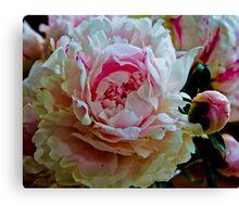 Peony Bloom Canvas Print