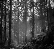 Black Spur 2 by Christine Wilson