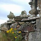 Ragwort on the Ruins by kalaryder