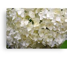 White small beautiful flowers texture. Canvas Print