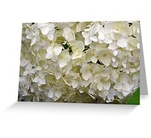 White small beautiful flowers texture. Greeting Card
