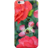 Pink roses in the garden. iPhone Case/Skin