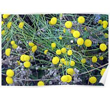 Yellow flowers background Poster
