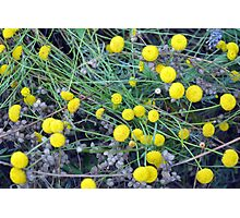 Yellow flowers background Photographic Print