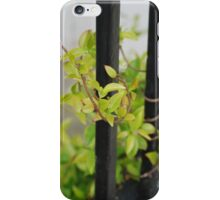Vine iPhone Case/Skin