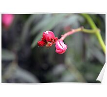Small red flower bud, natural background. Poster