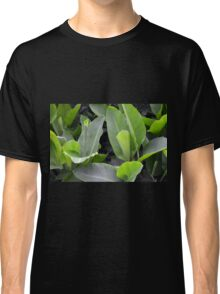 Green leaves natural background. Classic T-Shirt