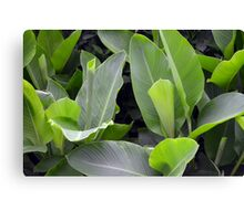 Green leaves natural background. Canvas Print