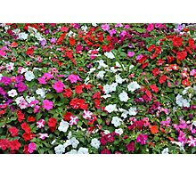 Colorful flowers pattern. Photographic Print