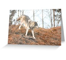 Wolf roaming Greeting Card