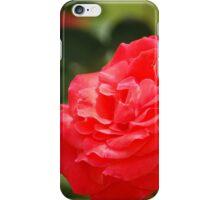 Rose 6 iPhone Case/Skin