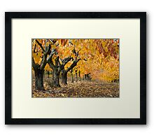 Collection of Beautiful Colorful Autumn Leaves Framed Print