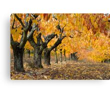 Collection of Beautiful Colorful Autumn Leaves Canvas Print