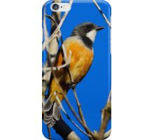 Rufous Whistler iPhone Case/Skin