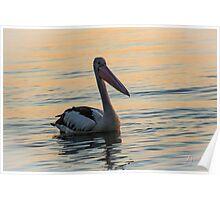 Peaceful Pelican Poster