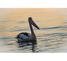 Peaceful Pelican Photographic Print