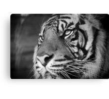 Tiger Style Canvas Print