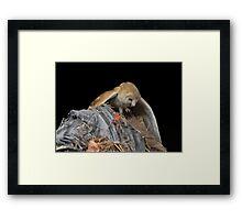 Hunter and Hunted Framed Print