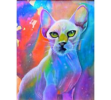 Colorful sphynx cat painting Photographic Print