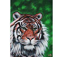 Sumatran Stripes Photographic Print