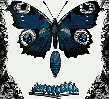 Grave of the Butterflies by Ryan  Miller