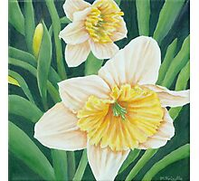 Spring Daffodils Painting Photographic Print