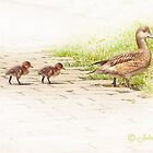 ..the first steps with Mammy Duck... by John44