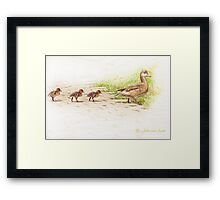 ..the first steps with Mammy Duck... Framed Print