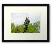 Quirky Giraffe with Tongue Sticking Out Framed Print