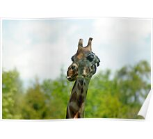 Quirky Giraffe with Tongue Sticking Out Poster