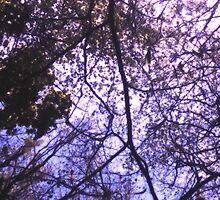 Branch Lattice by SuzyPhoto