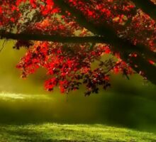 red tree with sunlight  Sticker