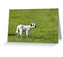 A young lamb in a field in Wiltshire, United Kingdom. Greeting Card