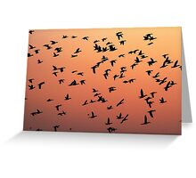 Flock f Birds at Sunset Greeting Card