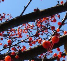 Crabapple Tree Sticker