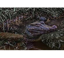 Caiman at Water with Menacing Look Photographic Print