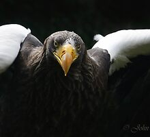 ..Eagle to tower : Ready  for take-off.. by John44