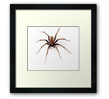 Scary Spider Framed Print