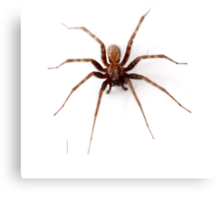 Scary Spider Canvas Print