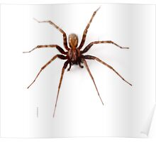 Scary Spider Poster