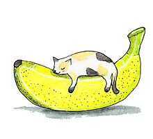 Banana cat Photographic Print